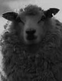 『ATARU』医療監修の精神科医が分析! 動物ホラーで人は癒されるか?