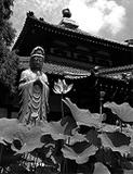 江戸時代のお寺は精神病院だった!? 薬に頼らざる「宗教的」精神疾患治療