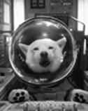 お父さん犬人気はますます加熱中? SMAP起用には孫さんの対抗意識が?──コストパフォーマンス最高!の広告戦略