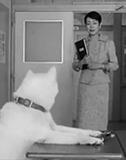 実写版『荒川アンダー ザ ブリッジ』監督・飯塚健が勝手に提案する白戸家CMの最終回とは?