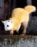 宮崎学が撮る新世代の野生動物