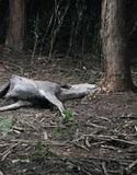 野生動物の死をめぐるドラマ