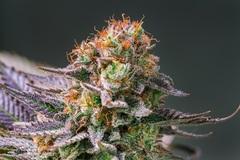 """THC入りのグミやチョコがヘルシーで大人気! コロナ禍のLAで""""必要不可欠""""な大麻フード"""