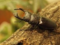 虫を飼うのは日本人だけ!?――五箇公一が語る「密猟される昆虫と外来種問題」
