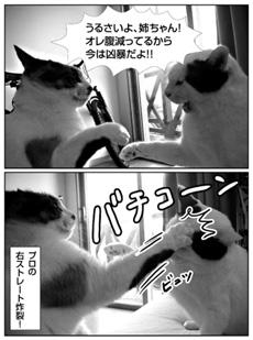 0911_nekomanga.jpg