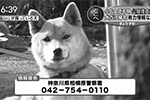1403_houchi_01.jpg